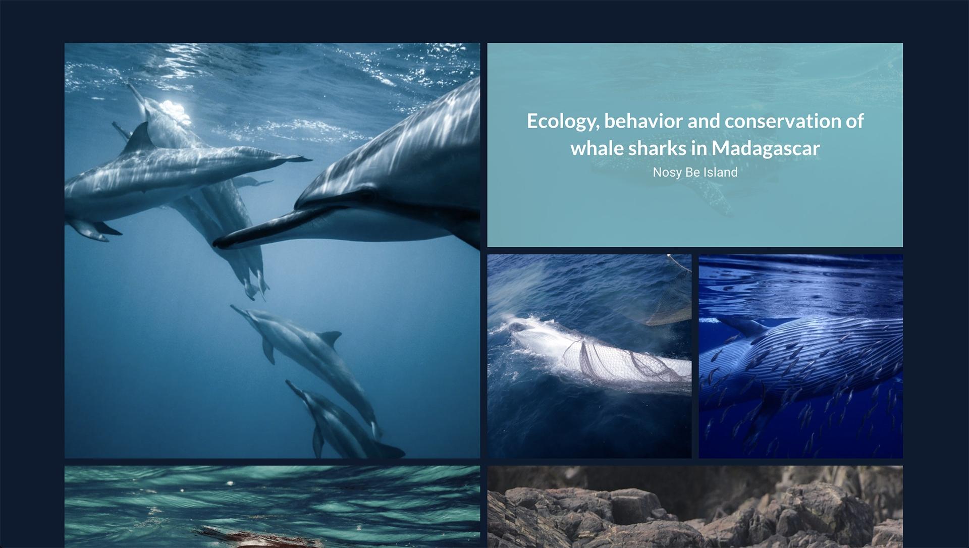 Website for Marine Conservation Ecology Lab by Regular Animal